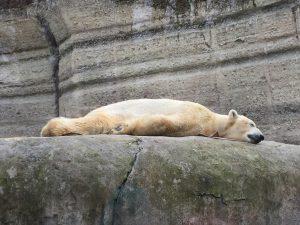 Ausflug mit Kindern München Zoo Eisbär