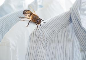 Zero Waste mit Bienenwachstücher